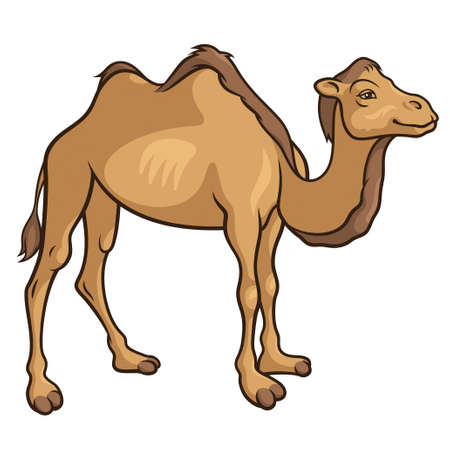 cartoon camel: Cartoon camel isolated on a white background, vector illustration