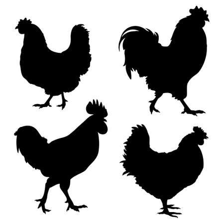 farm animals: Silhouettes of chickens and roosters isolated on white