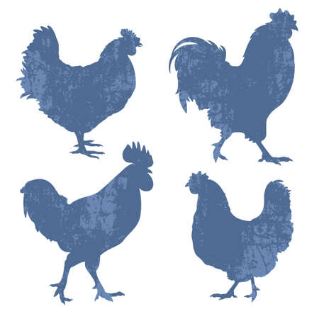 Silhouettes of chickens and roosters with grunge effect  isolated on white Illustration