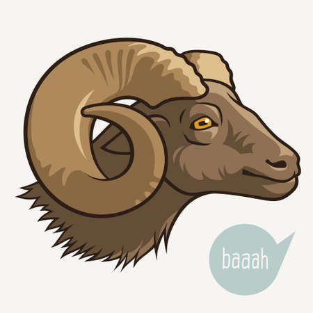 bighorn: Head of goat or ram. Vector illustration for your design Illustration