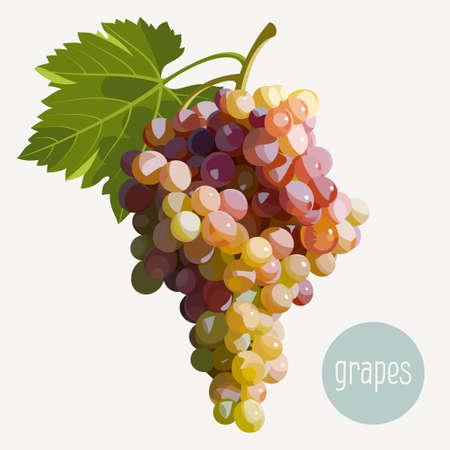 Ilustración vectorial de un racimo de uvas Foto de archivo - 35270812