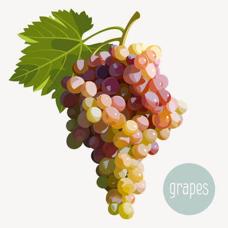 grape fruit: Vector illustration of a bunch of grapes Illustration