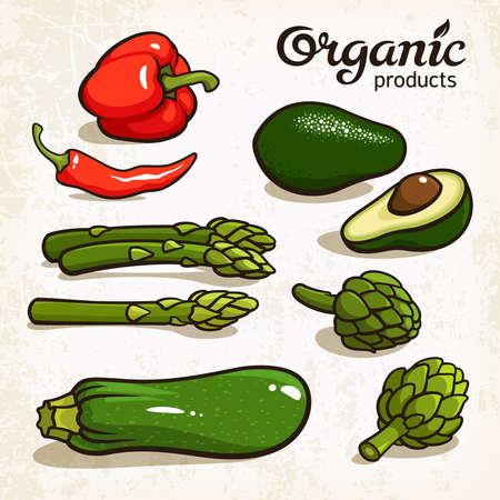zucchini: illustration of vegetables: avocado, chili, pepper, asparagus, artichoke, zucchini