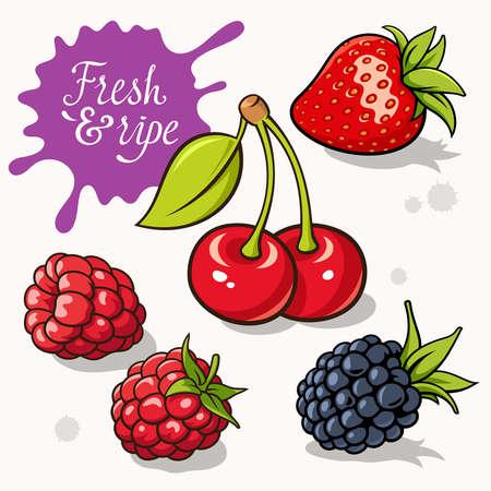 """cereza: Conjunto de bayas. ilustraciones de fresa, frambuesa y cereza. Inscripci�n caligr�fica """"Fresh & madura"""""""