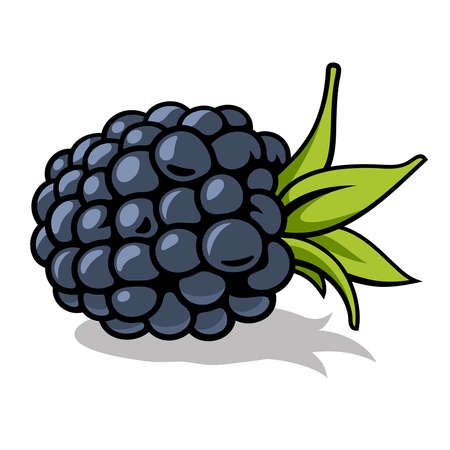 illustration of fresh, ripe blackberry with green leaves isolated on white