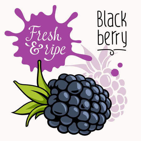 grown: illustration of ripe juicy blackberry. Concept for a farmers market. Idea for the label design. Organic, local grown product