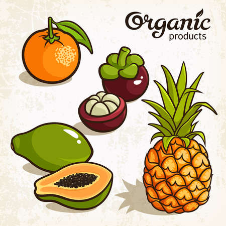illustration of exotic fruits: pineapple, orange, mangosteen, papaya