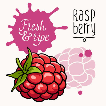 raspberry: illustration of ripe juicy raspberry. Concept for a Farmers Market. Idea for the label design. Organic, local grown products