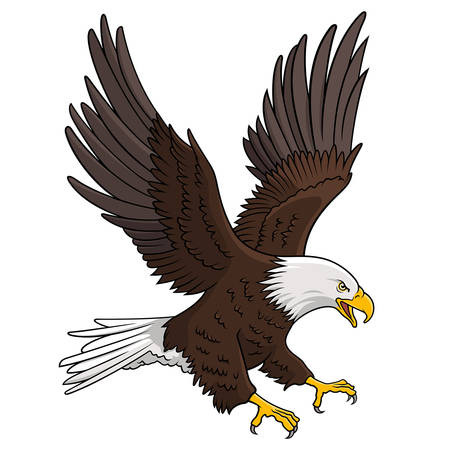 Bald Eagle isolated on white. This illustration can be used as a print on T-shirts, tattoo element or other uses