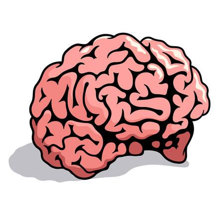 Human brain. Vector illustration