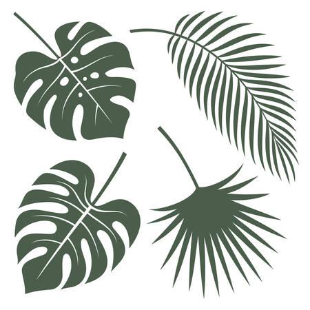 Wektor sylwetki tropikalnych liści. Monstera, palma kokosowa i palma wachlarzowa.