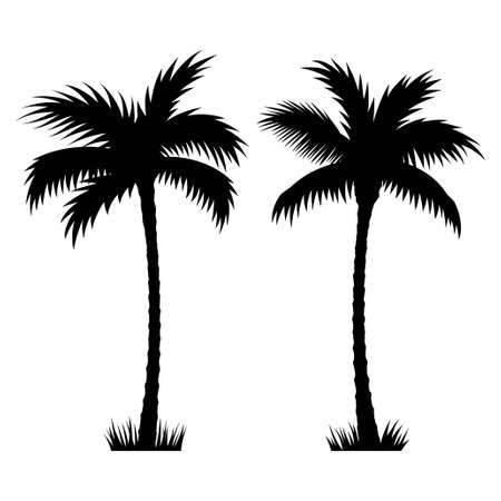Tropical palm trees. Vector silhouettes isolated on white background. Hand drawn illustration of palm trees. Illusztráció