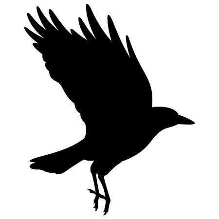 Silhouette of a flying black raven. Vector black white illustration