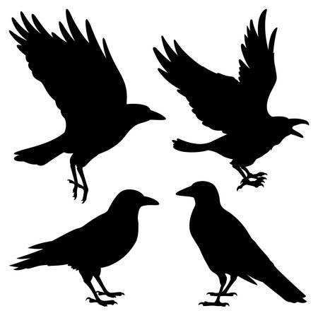 Set of silhouettes of black ravens. Vector black white illustration