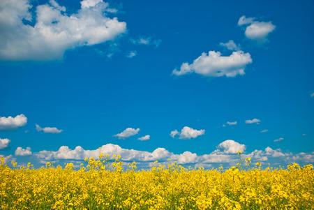 champ de fleurs: fleurs des champs Banque d'images
