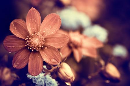 rainy day flower Standard-Bild