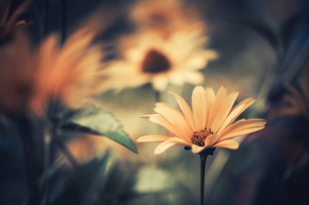 summer sunset flower