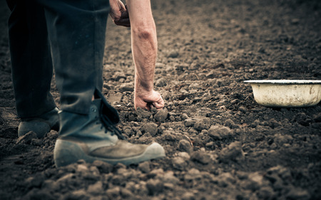 farmer planting onion seeds in the ground