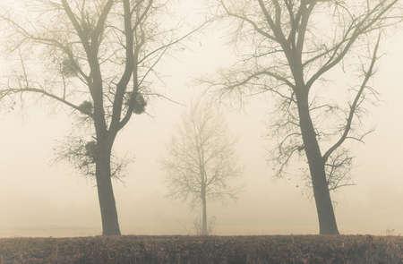 haze: fall morning haze at meadow Stock Photo