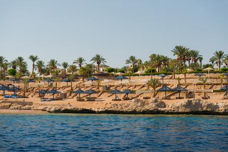 Red sea coast with palm trees along beach