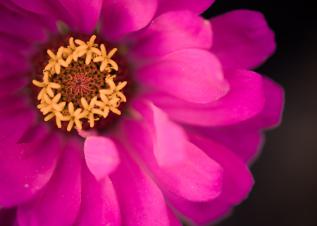 beautiful red summer flower Zdjęcie Seryjne