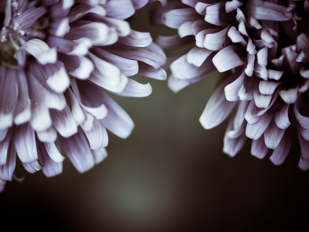 summer flowers leaves at bastract background Zdjęcie Seryjne