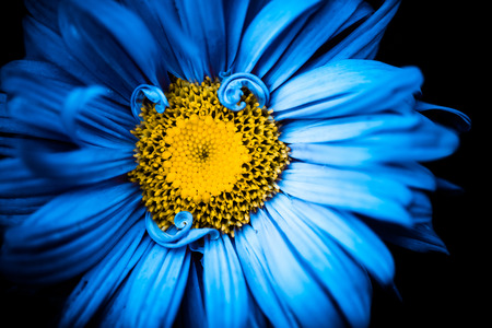 beautiful blue summertime flower with yellow center