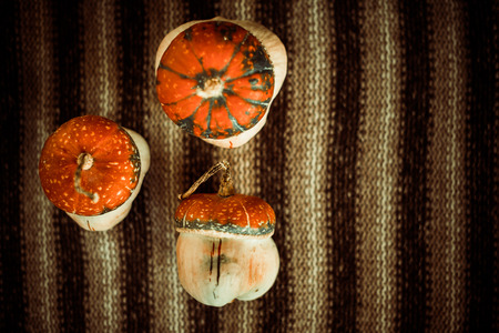 little pumkins isolated on vintage striped cloth background