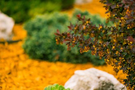 fresh spring colorful bush