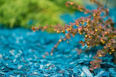 colorful natural decoration Standard-Bild