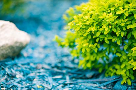 beautiful natural spring decoration