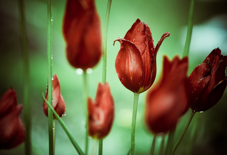 rain drops on buds