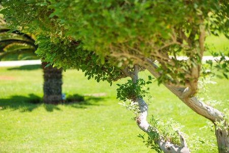 fresh green decorative park trees