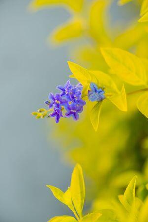 beautiful violet tropical flowers