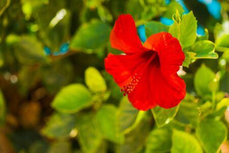 exotic summer season flower