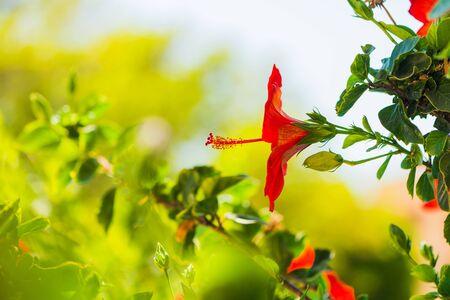 red exotic summer season flower