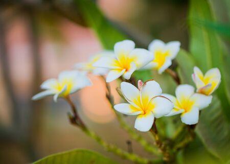 beautiful exotic flowers in garden sunset light Standard-Bild