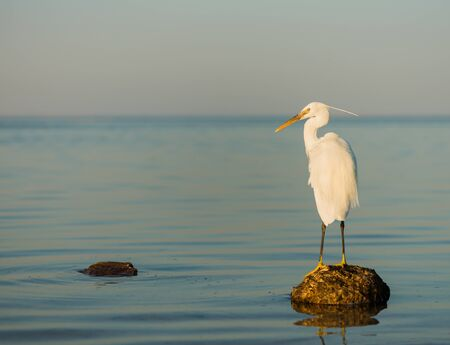 wild white brird on a stone at seascape sunset