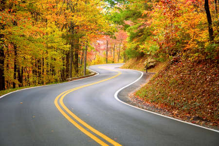 autumn road: Winding road