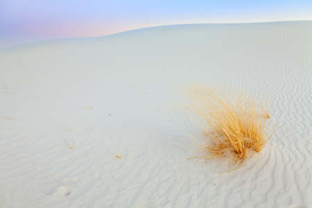 Gypsum dunes and grasses at White Sands  photo
