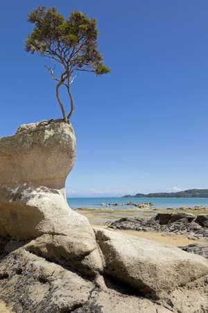 Arbre sur le rocher