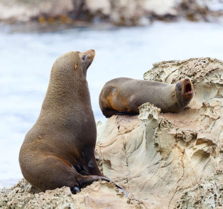 Life of sea lions