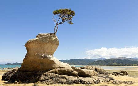Arbre sur la roche