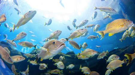 Onderwater beeld van een school vissen Stockfoto
