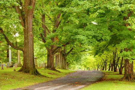 Oak alley photo