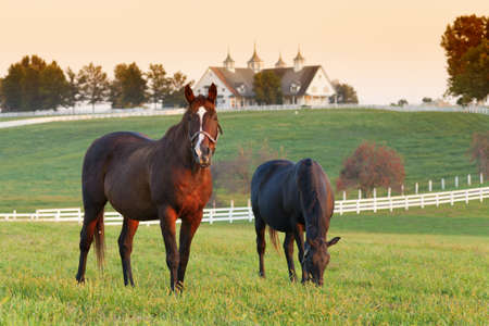 kentucky: Horses in the field Stock Photo