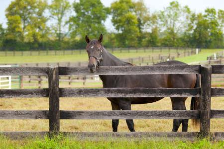 black horse: Caballo en una granja