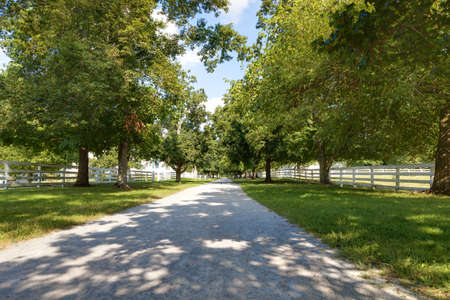 bluegrass: Tree Lined Alley