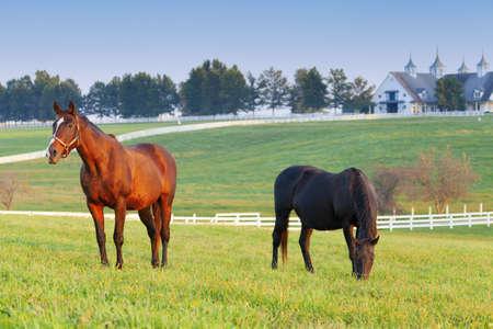 Los caballos en una granja Foto de archivo - 13500654