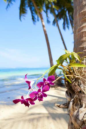 flores fucsia: Orquídeas en la playa